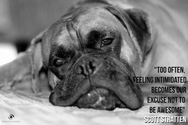 Marketing Quotes - Too often, feeling intimidated becomes our excuse not to be awesome - Scott Stratten